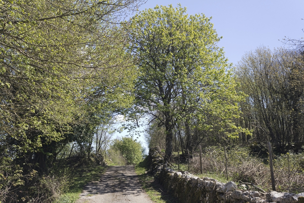 Country lane: A rural lane in southern Italy in spring.