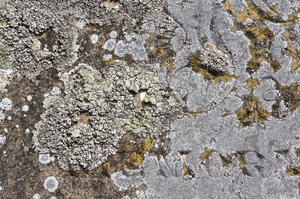 Loss of memory: Lichens growing over the word