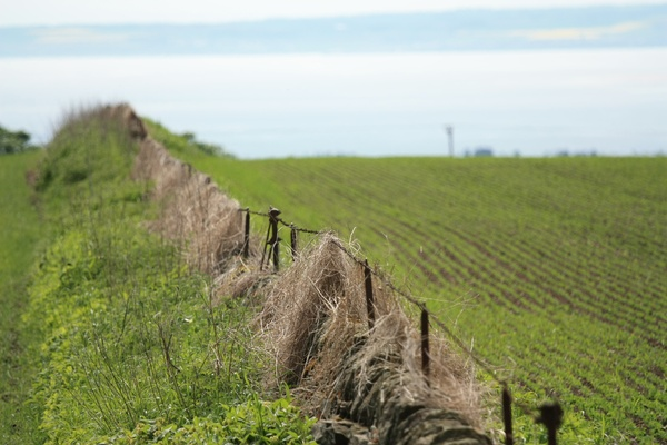 Fence between fields