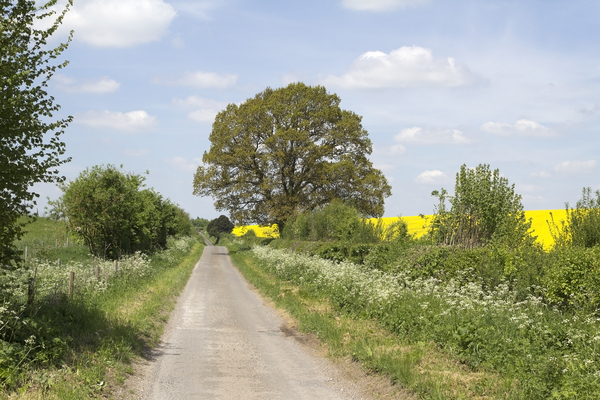 Rural lane in spring