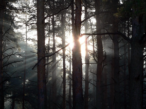 deep forest: It is not the Sun.. it is a spirit from deep, deep forest