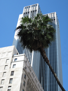 Sky-scraper: Modern center of Los Angeles. Palms and sky-scrapers.