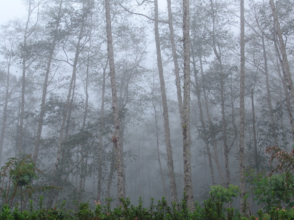 Of trees and mist: A cloudy forest in nearby Cataratas de la Paz, in Costa Rica