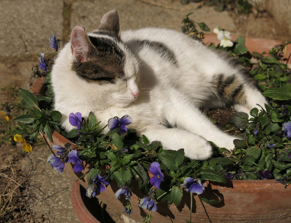 asleep in flower pot