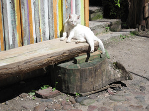 Rest: A cat resting on a bench