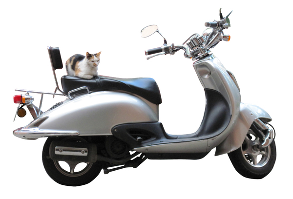 Cat on the scooter: Where is he going?