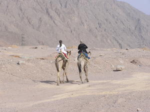 Camel riders on a desert