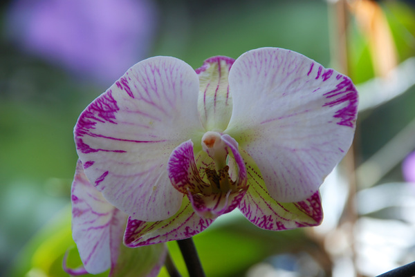 orchidee: orchids my wife