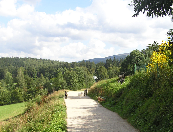 Mountain path: A trail near Szklarska Poreba. Hills and low mountains.