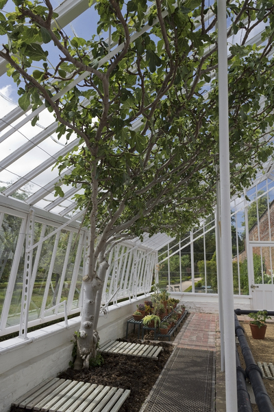 Tree in a greenhouse