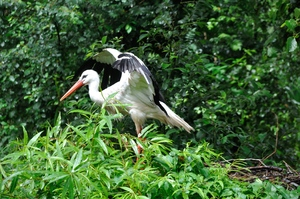 Storks 1: Storks in the zoo