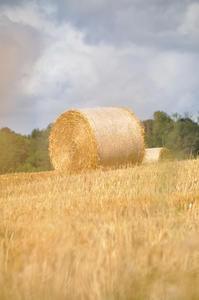 Hay bales  8: Hay bales in the field. Normandy France