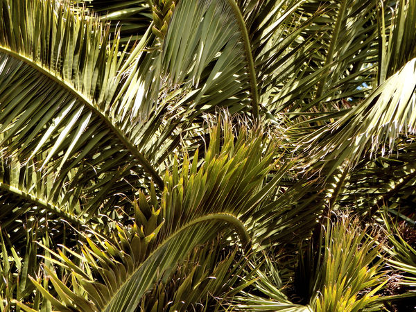 palm fronds background1