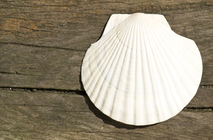 Shell on wooden background