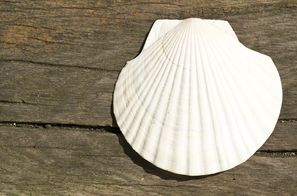 Shell on wooden background: Shell with lots of copy space