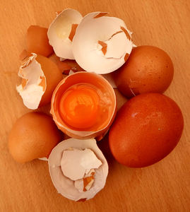 broken egg shells6