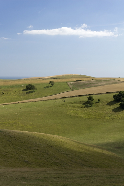 South Downs landscape