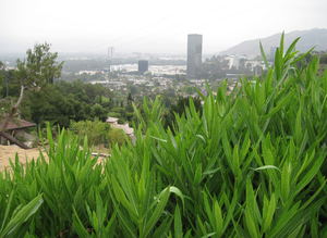 West Hollywood hills