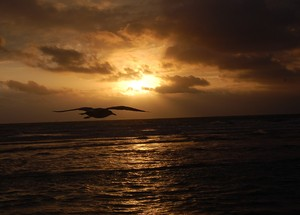 Flying: Sunrise at South Beach