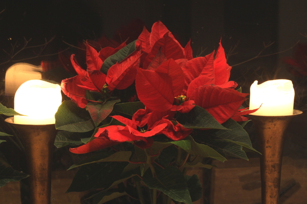 Poinsettia and candles: Two gleaming candles with a pointsettia