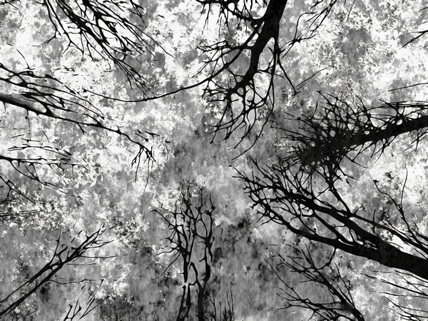 Scary Trees 1: Looking up in a forest of tree silhouettes against a grunge background texture. You may prefer:  http://www.rgbstock.com/photo/olzeyTS/Gargoyle  or:  http://www.rgbstock.com/photo/nR4pFy6/Grunge+Tree
