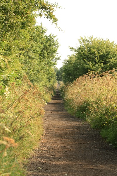 Straight Path: Straight path along an old railway track