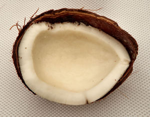 coconut3: rough internal case of raw coconut and flesh