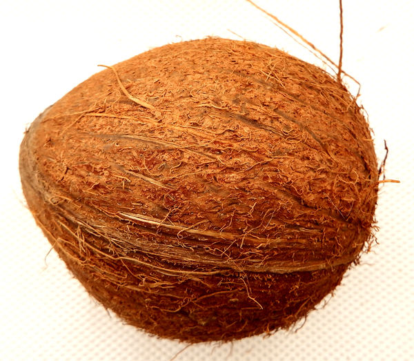 coconut1: rough external case of raw coconut