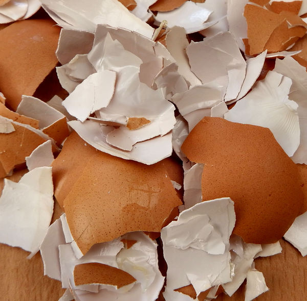 broken egg shells11