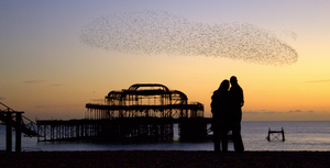 Starlings in Brighton
