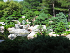 mini japanese garden: miniaturized rocks, trees, water