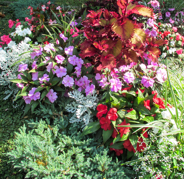 colourful plants assortment 2: colourful plants assortment 2