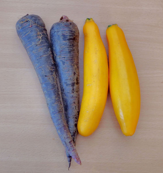 vegetable colours1b: purple carrots and yellow-zucchini