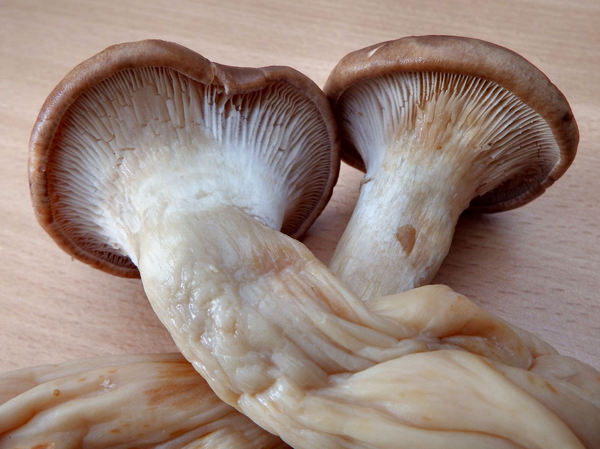 king oyster mushrooms3