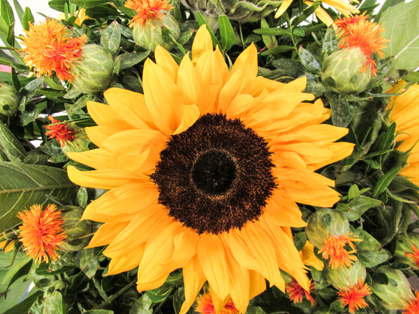 sunflower bouquet 3