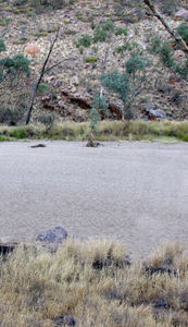 dry river2b: dry river bed in central Australian drought