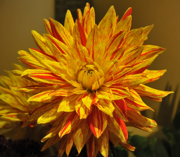 bright yellow and red flower