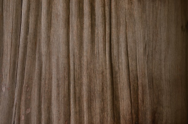 Worn plywood texture: A closeup of plywood that has deteriorated in the sun and rain, its upper layer having shriveled.