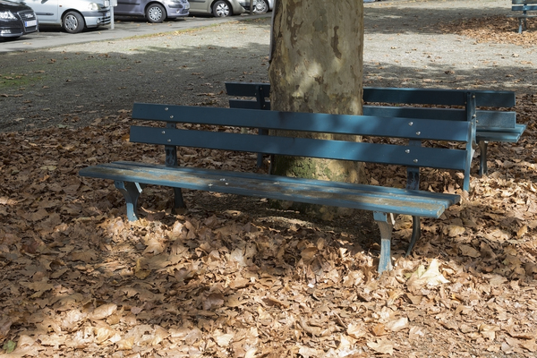 Bench and fallen leaves