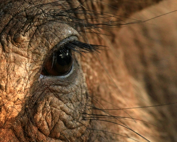 Warthog Close-ups 4