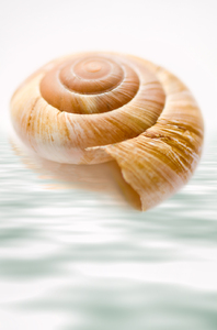 Sea shell in water reflexion