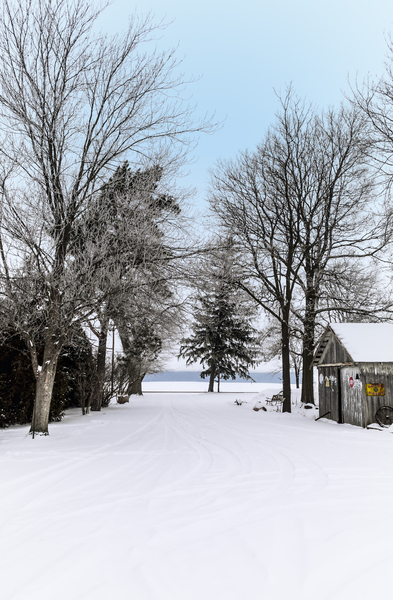 Snowy Drive: A snowy winter landscape with icy trees leading down a driveway.