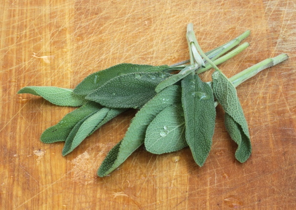 Sage 1: Fresh sage on an old used wooden board with waterdrops