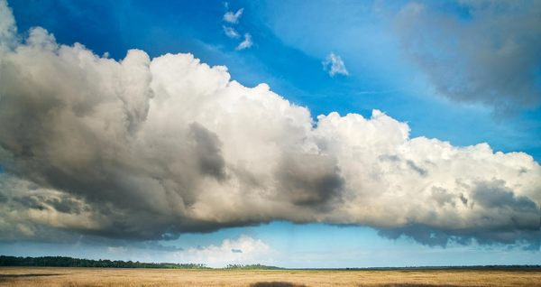 Large cloud over marshland