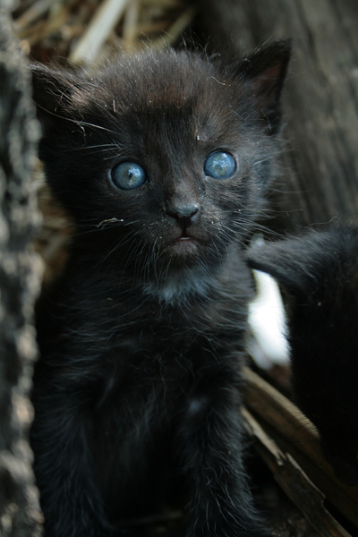 black kitty 1: let me know if you find it usefull