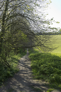 Countryside footpath