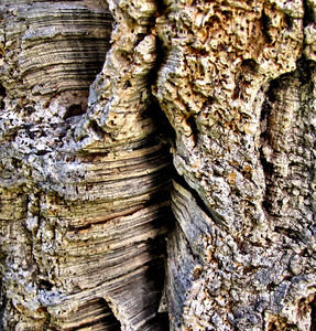 cork tree bark textures