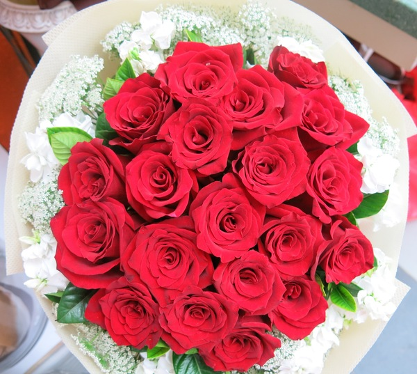 red roses: beautiful red roses