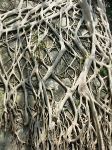 roots background texture