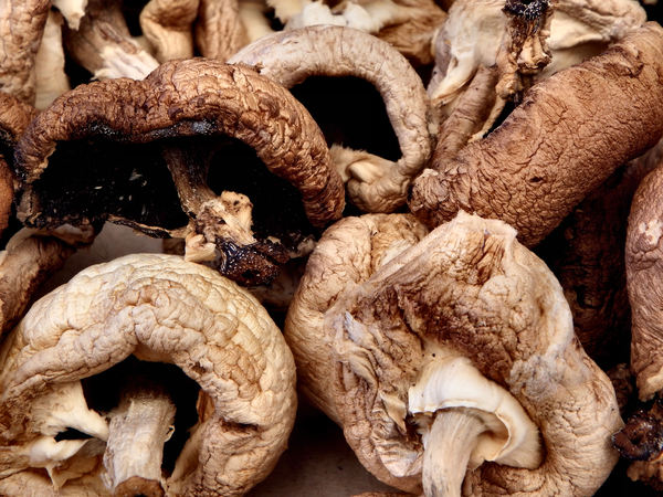 sundried mushrooms6